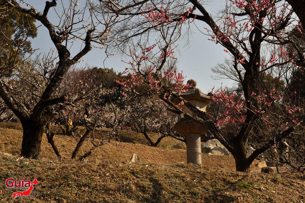 Iwazu Tenmangu Plums Festival - Okazaki 24