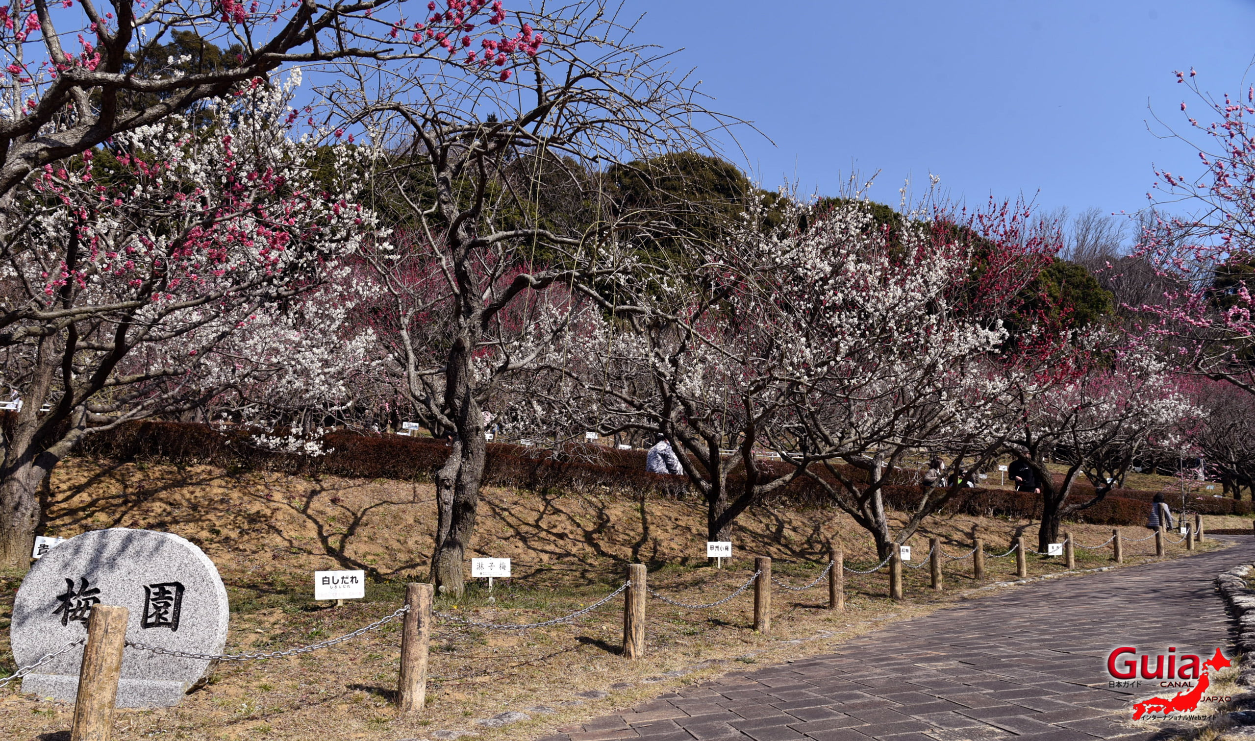 Festival Flor de Ameixa (Ume) - Parque Akatsukayama Toyokawa 14