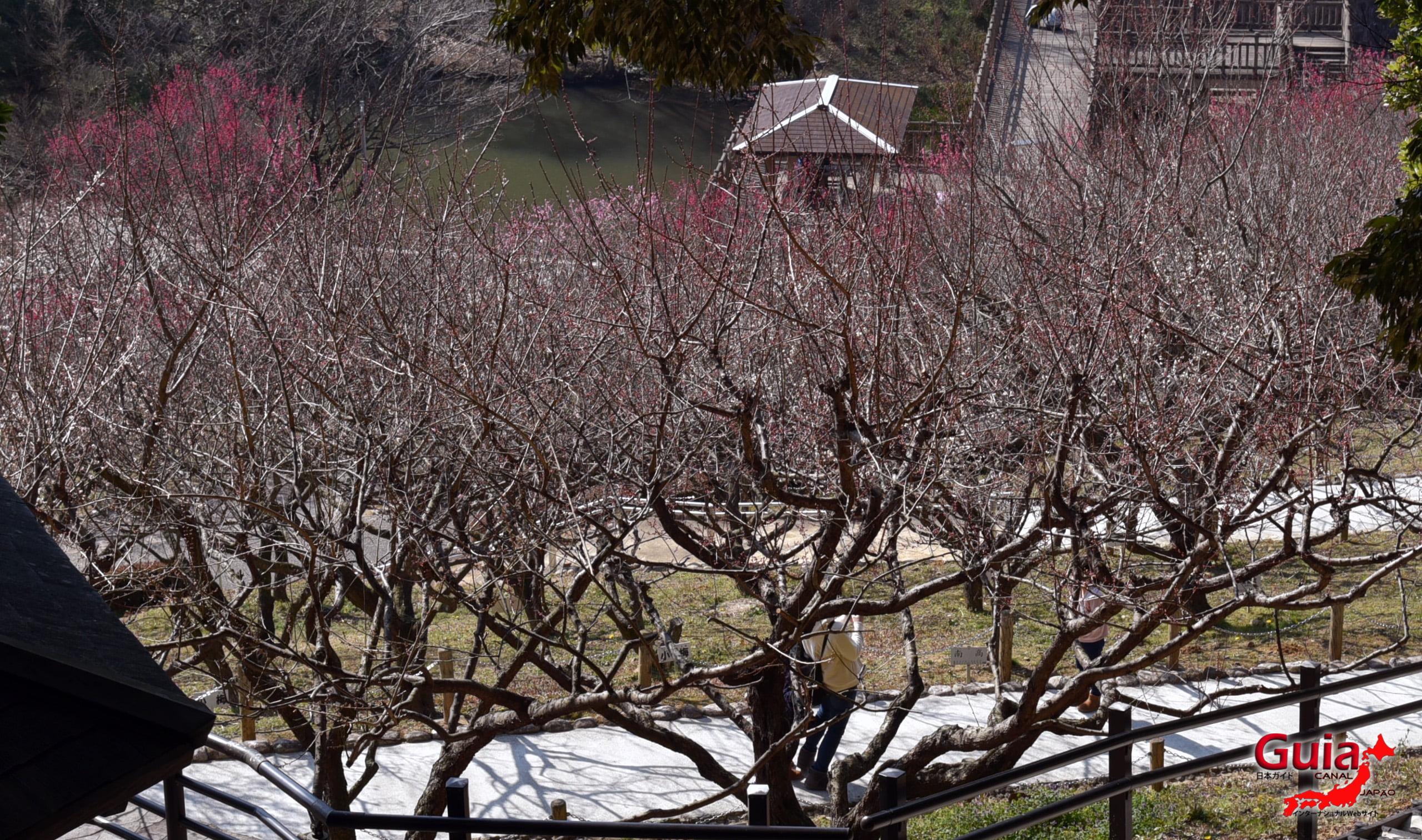 Festival Flor de Ameixa (Ume) - Parque Akatsukayama Toyokawa 16