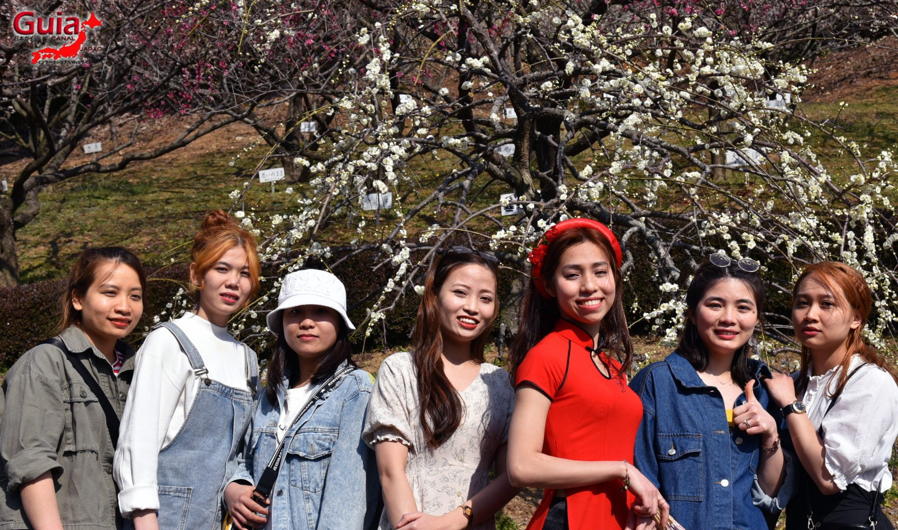 Plum Blossom Festival (Ume) - Akatsukayama Toyokawa Park 18