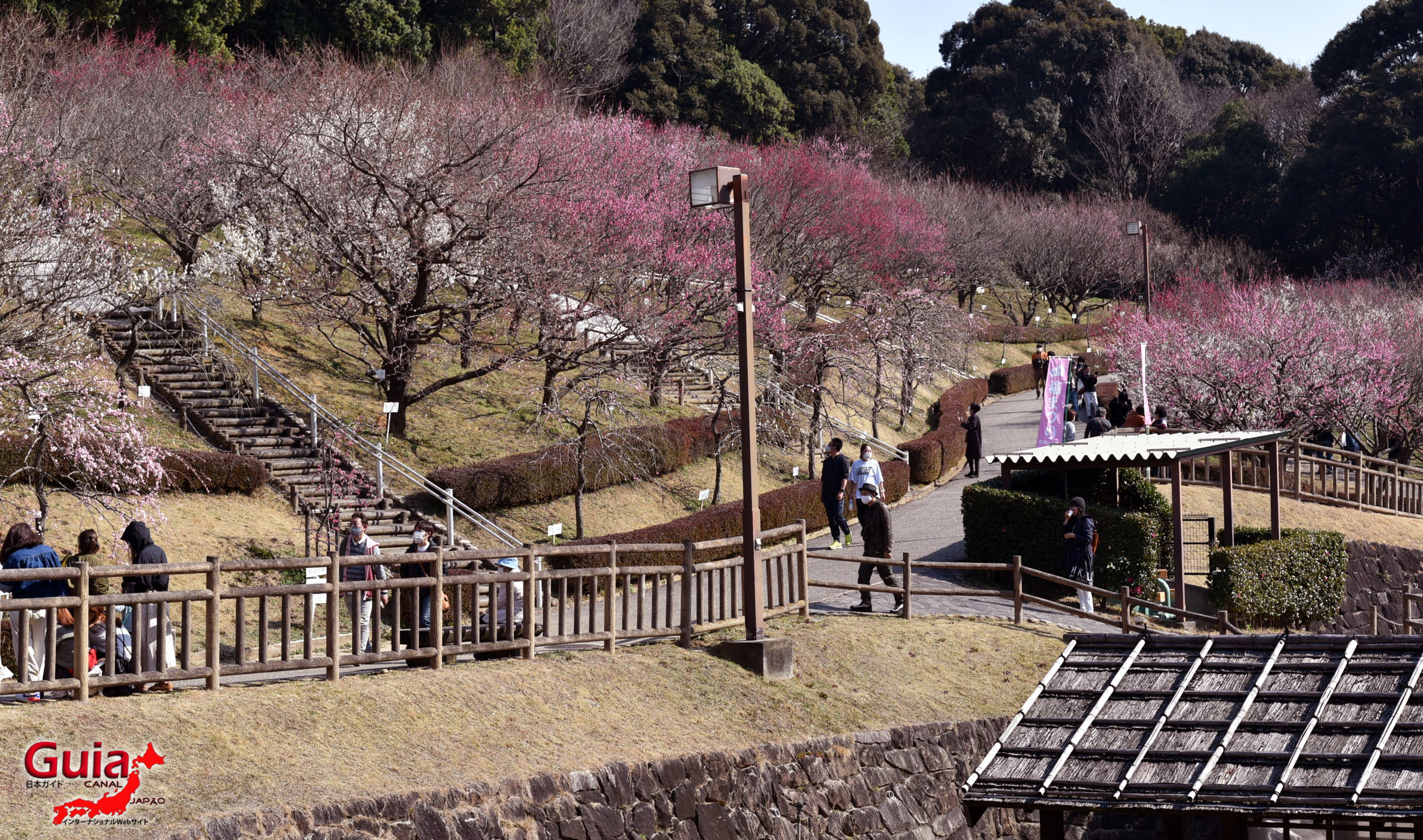 Plum Blossom Festival (Ume) - Akatsukayama Toyokawa Park 2