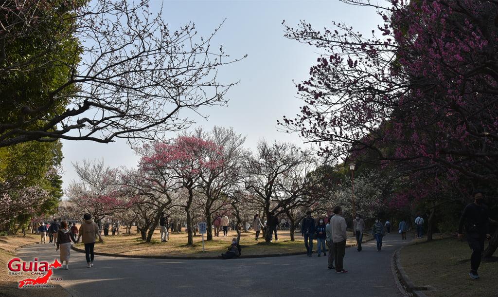 Festival da Ameixa do Parque Mukaiyama Ryokuchi - Toyohashi 1