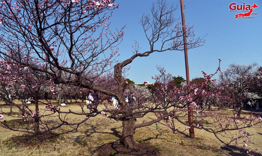 Festival da Ameixa do Parque Mukaiyama Ryokuchi - Toyohashi 15