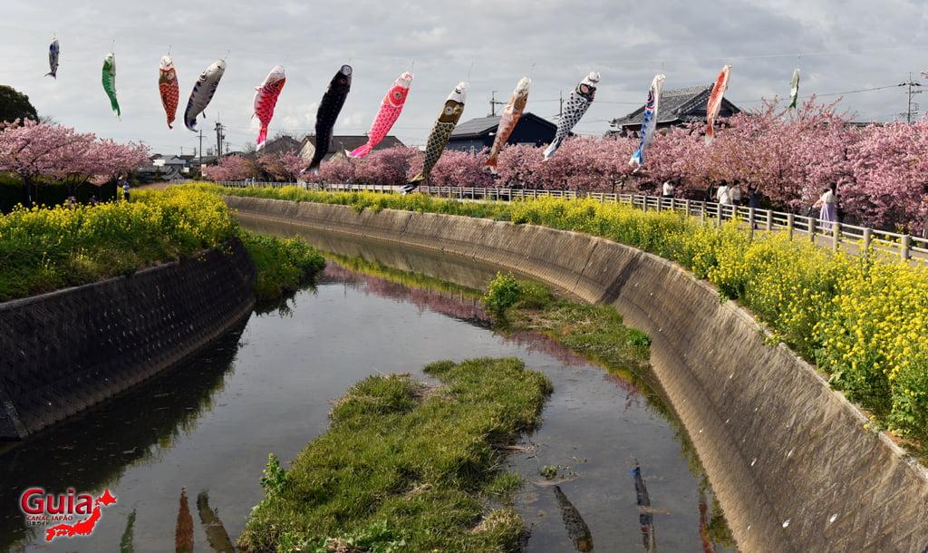 Festival de Flor de Colza e Cerejeira Kawazu do Rio Memedagawa 2