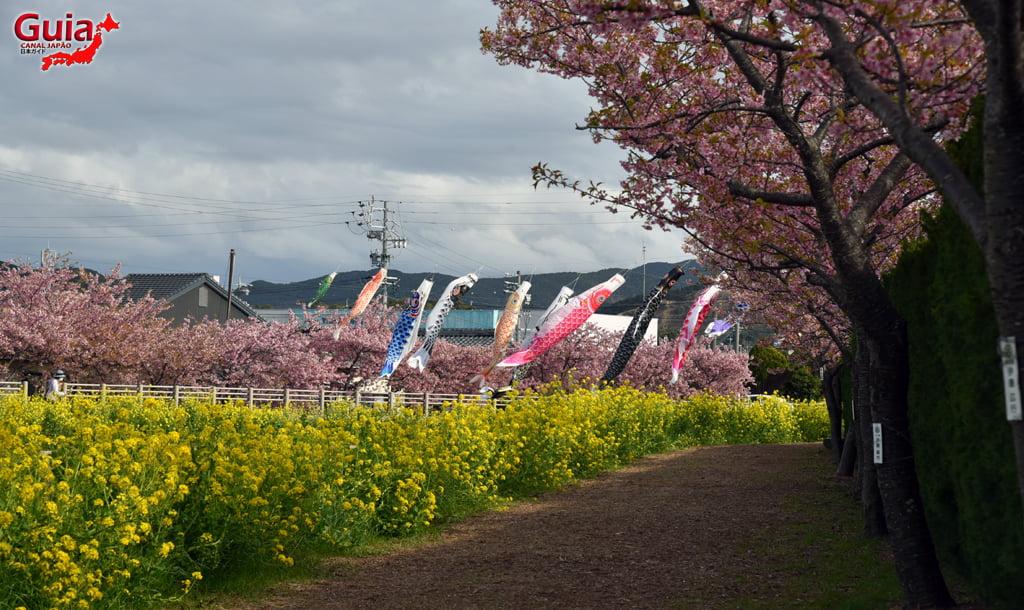 Festival de Flor de Colza e Cerejeira Kawazu do Rio Memedagawa 10