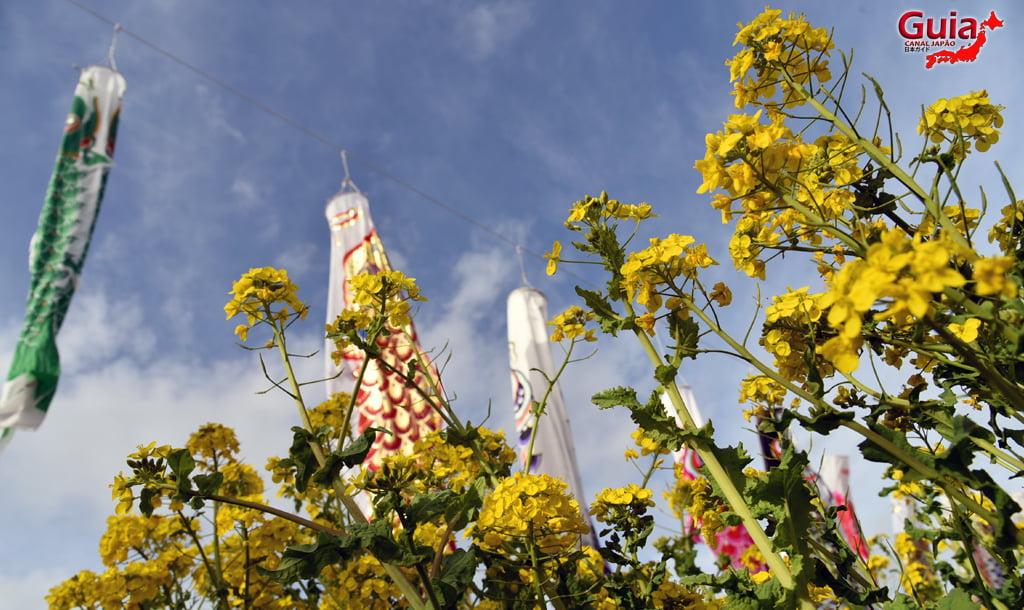 Festival de Flor de Colza e Cerejeira Kawazu do Rio Memedagawa 14