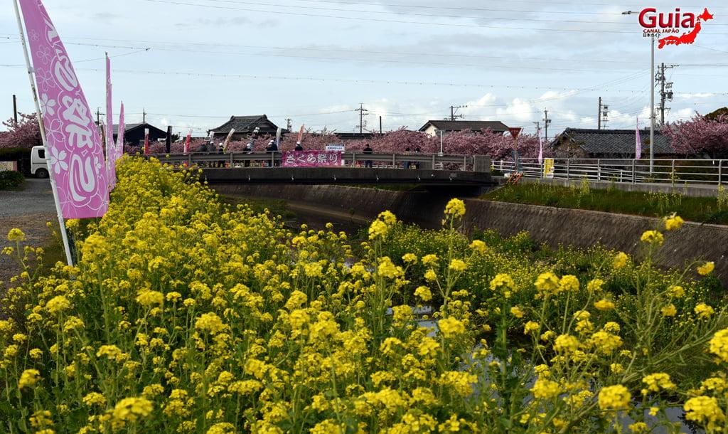 Festival de Flor de Colza e Cerejeira Kawazu do Rio Memedagawa 15