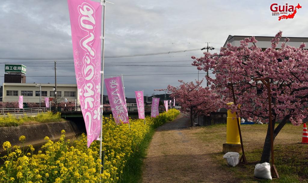 Festival de Flor de Colza e Cerejeira Kawazu do Rio Memedagawa 16