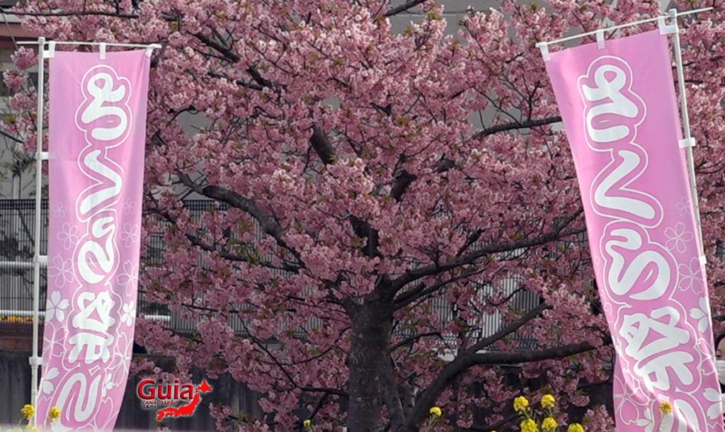 Festival de Flor de Colza e Cerejeira Kawazu do Rio Memedagawa 18