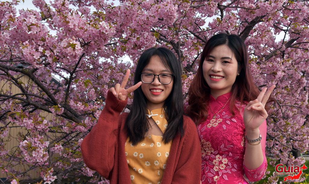 Festival de Flor de Colza e Cerejeira Kawazu do Rio Memedagawa 22