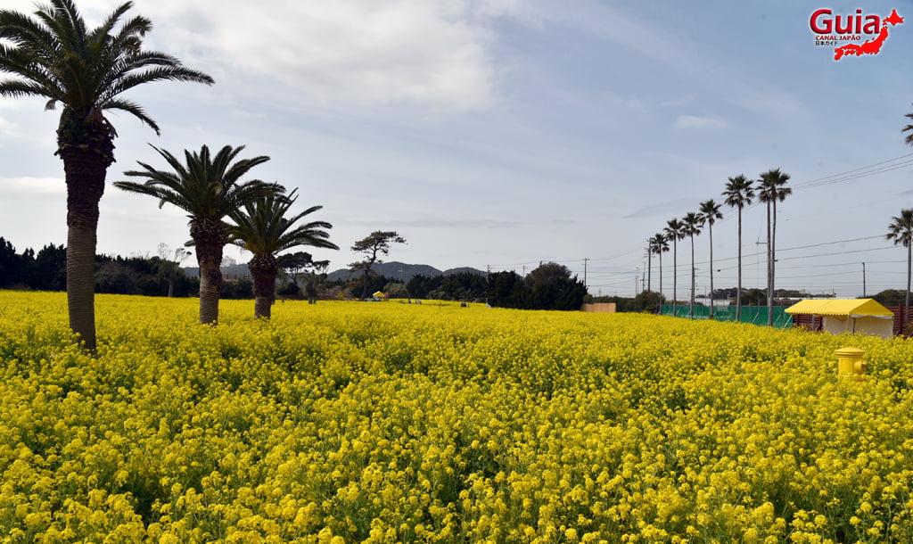 Jardim Flor de Colza - Irago Nanohana 3