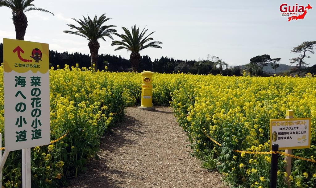 Jardim Flor de Colza - Irago Nanohana 5