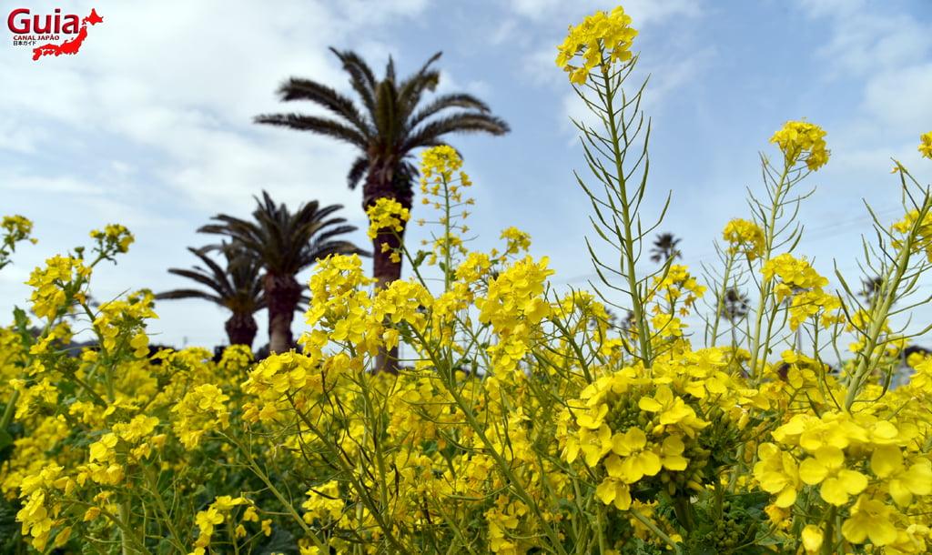 Jardim Flor de Colza - Irago Nanohana 6