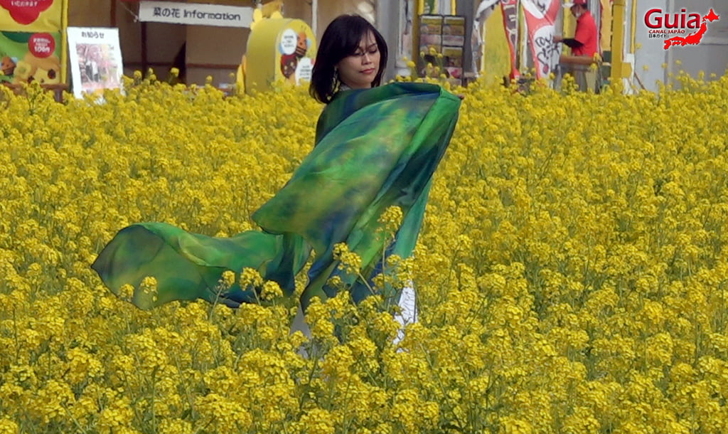 Jardim Flor de Colza - Irago Nanohana 31