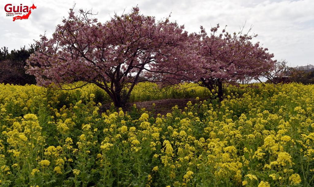 Jardim Flor de Colza - Irago Nanohana 17