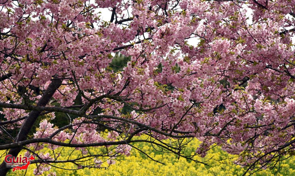 Jardim Flor de Colza - Irago Nanohana 18