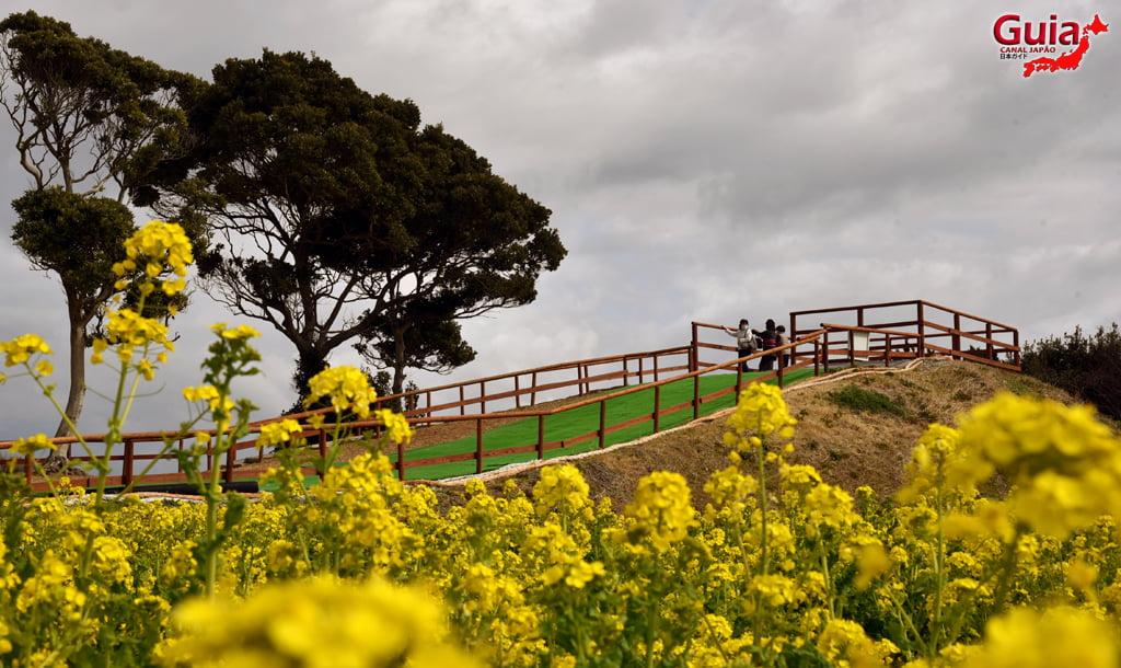 Jardim Flor de Colza - Irago Nanohana 21