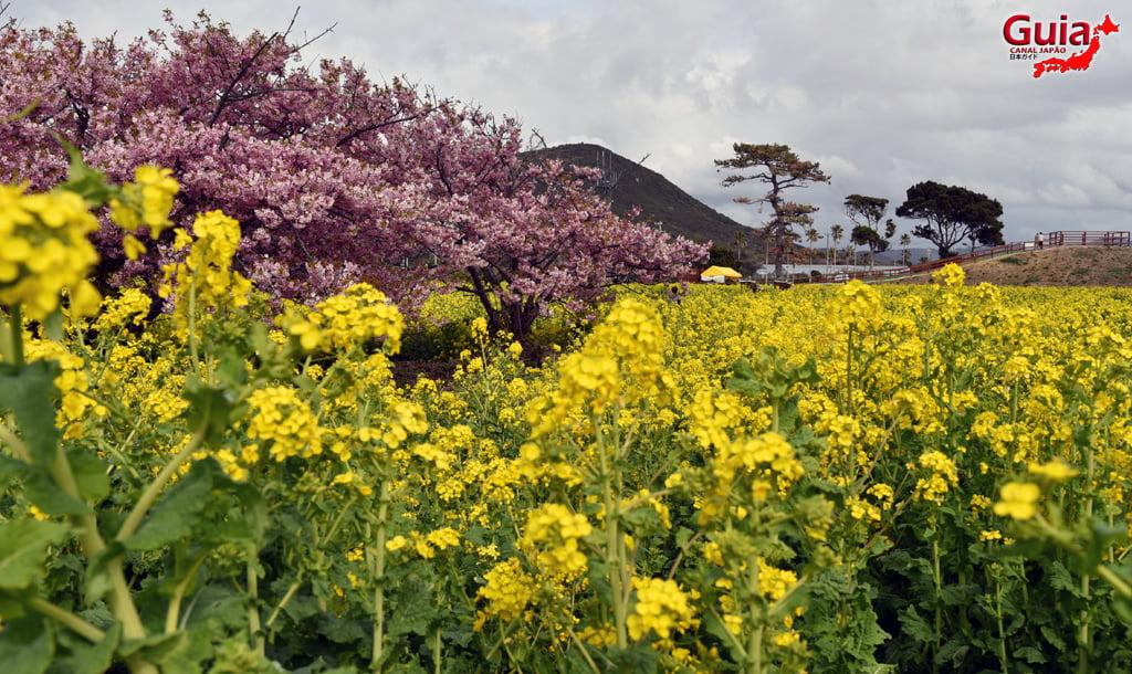 Jardim Flor de Colza - Irago Nanohana 22