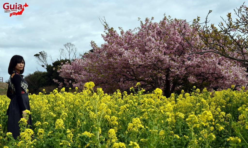Jardim Flor de Colza - Irago Nanohana 23