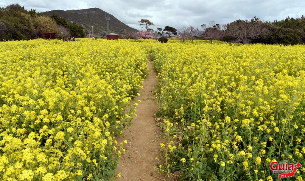 Jardim Flor de Colza - Irago Nanohana 24