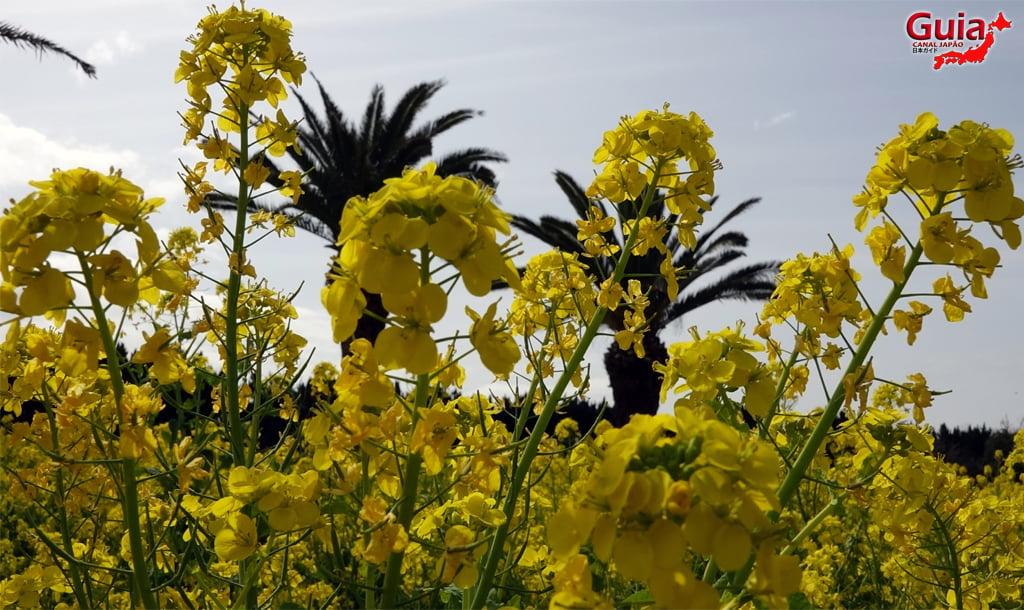 Jardim Flor de Colza - Irago Nanohana 27