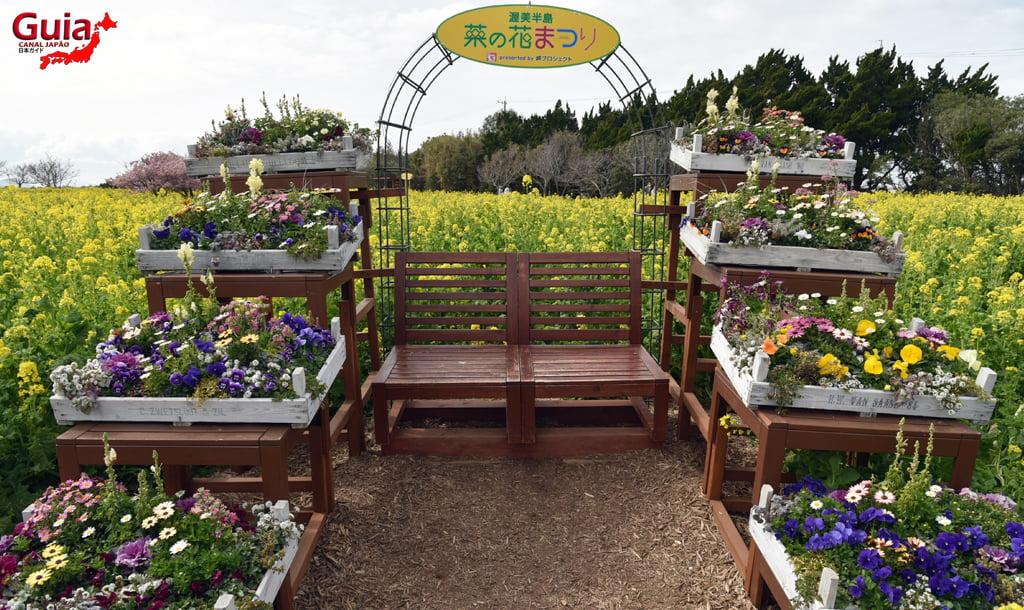 Jardim Flor de Colza - Irago Nanohana 29