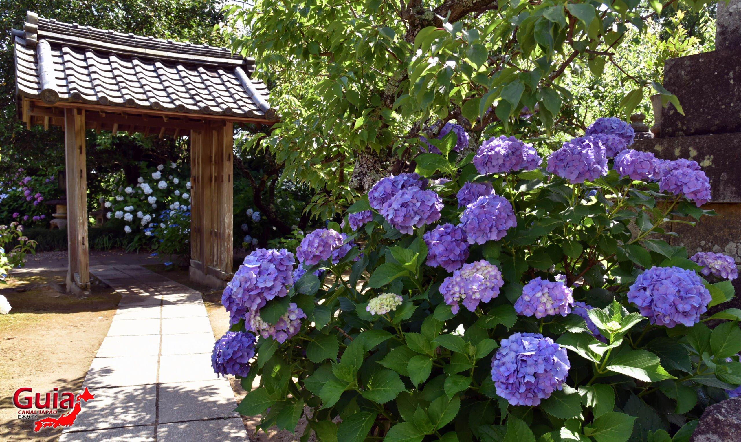 Festival Hortênsia do Templo Honko-ji 20