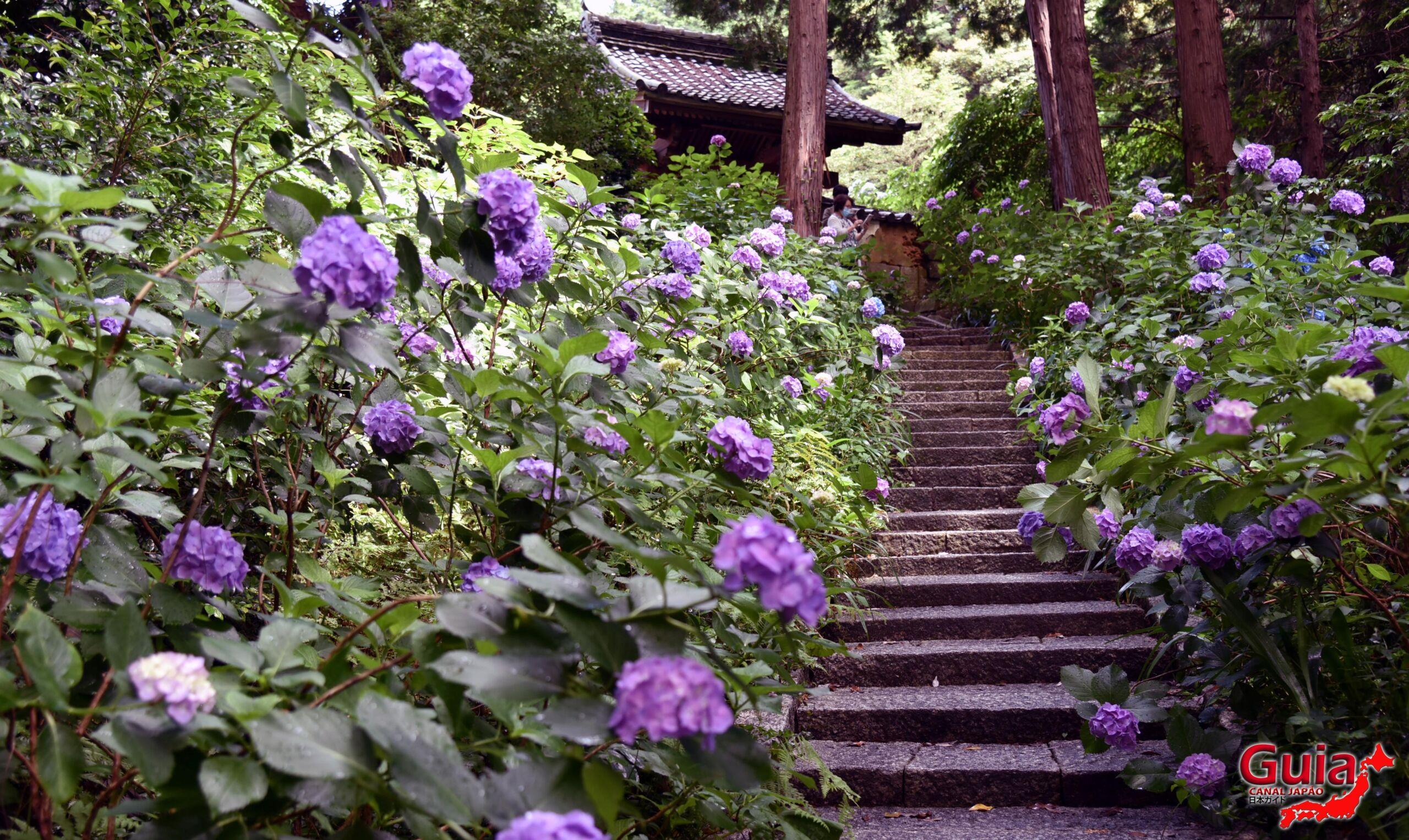 Festival Hortênsia do Templo Honko-ji 25