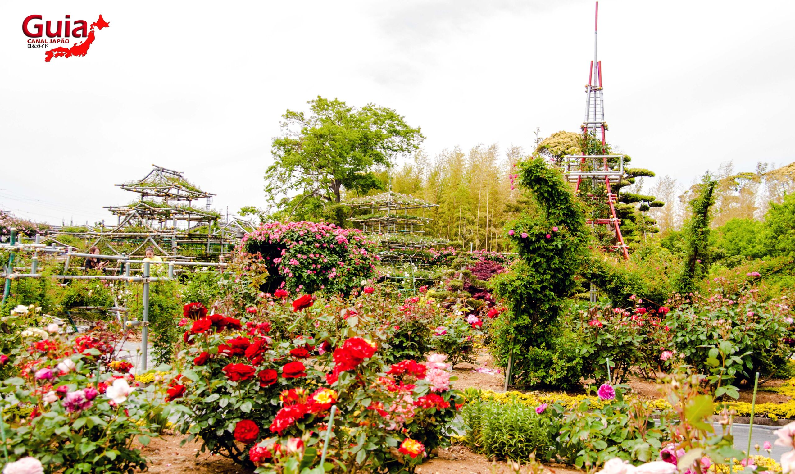 Jardim de Rosas - Bara no Miyako-en 15